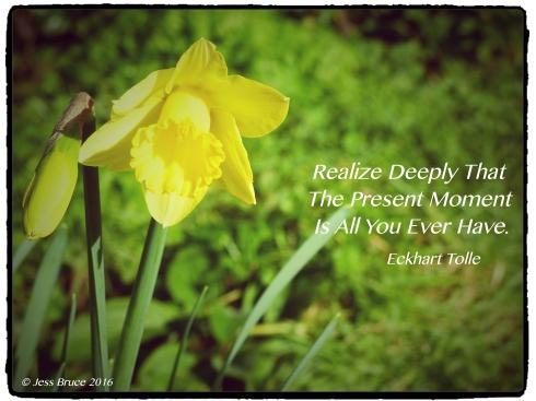 Present Moment Daffodil